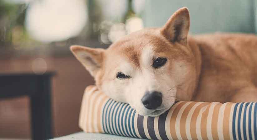 Hund ohne Stress