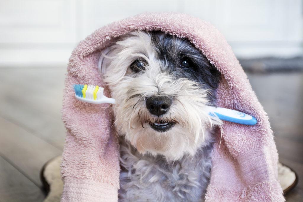 Zahnpflege beim Hund ist sehr wichtig
