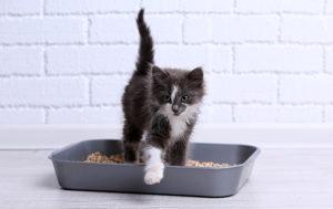 Katzenpensionen